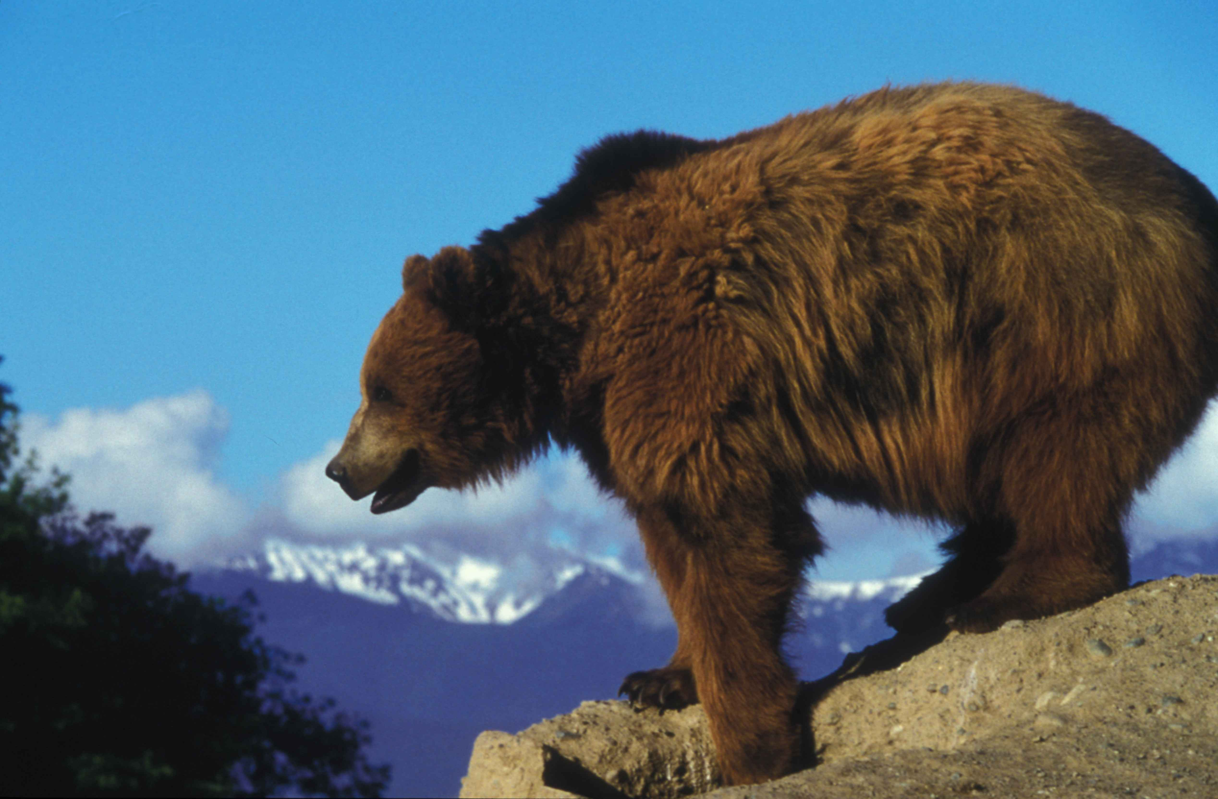 Lions, Tigers, And Bears, Oh My! What Is A Keystone